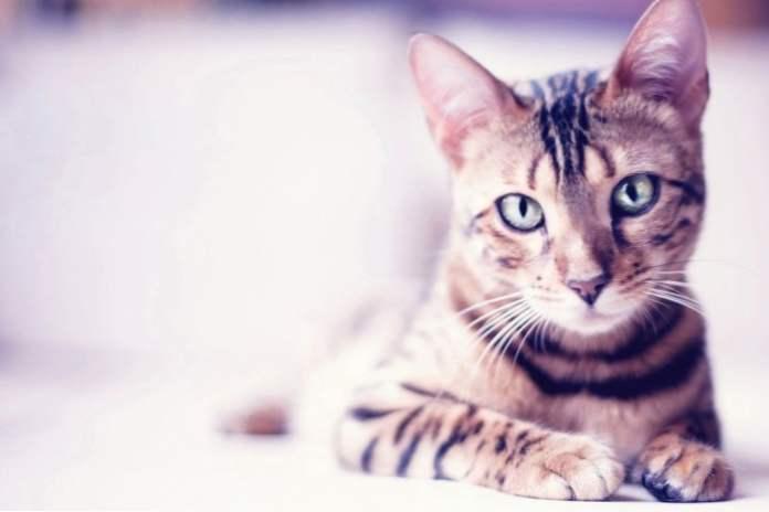 fotografija afričkih djevojaka maca