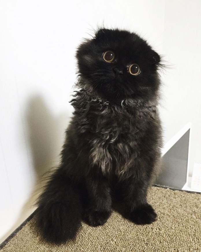 Čierne ženy pekná mačička