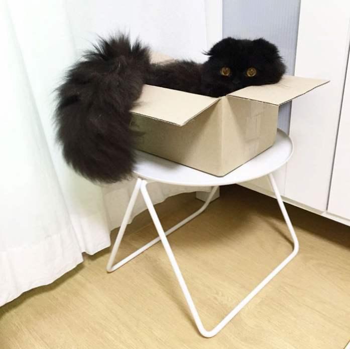 čierny muž mačička